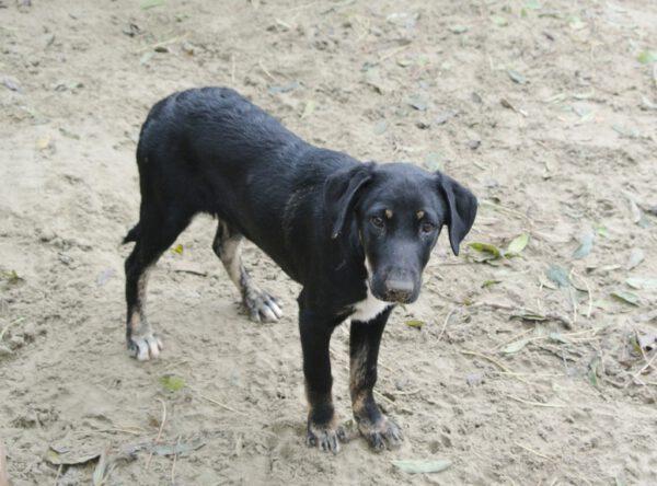 Pup Rocky zwarte hond