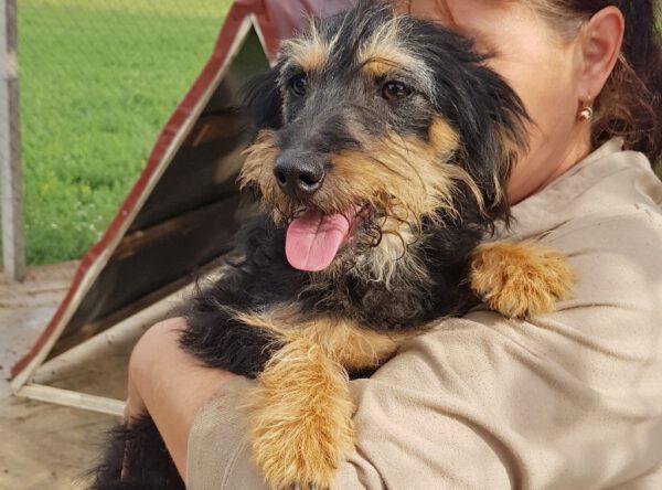 Roxi lief klein hondje