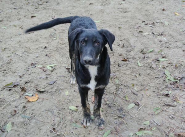 Pup Rudi grote hond