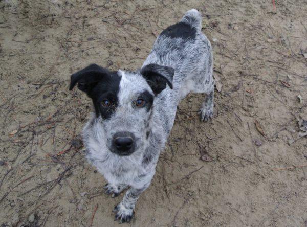 Pup Potyi gevlekt hondje
