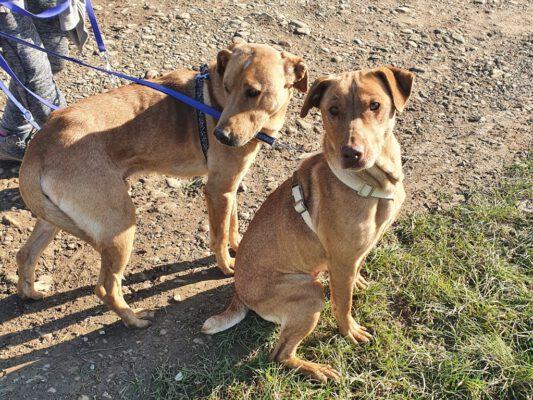 Honden Gogu en Lola broer en zus