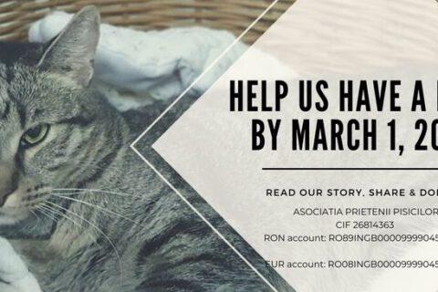 Doneer voor het kattenasiel