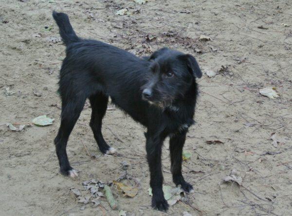 Lynn zwart ruwharig hondje