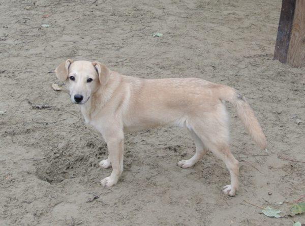 Pup Valerie vrolijk blondje