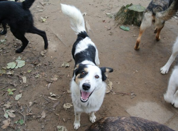 Xenna vrolijk jong hondje