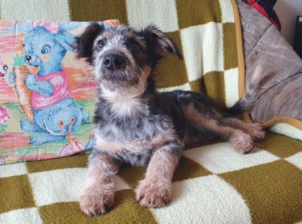 Pup Danny grappig ruwhaartje