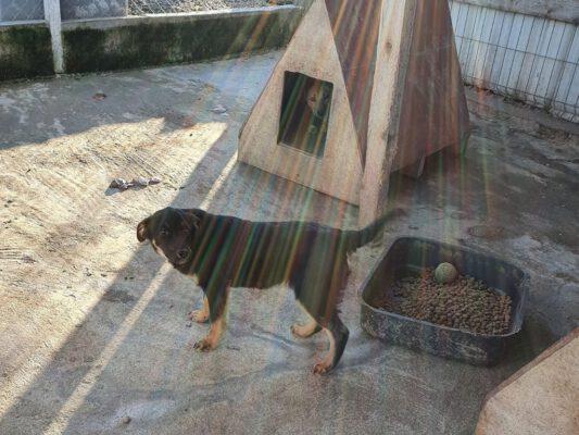 Puppy Darko in het asiel