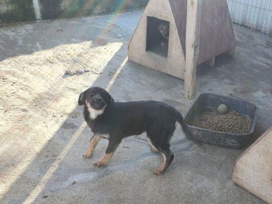 Puppy Darko in de kennel