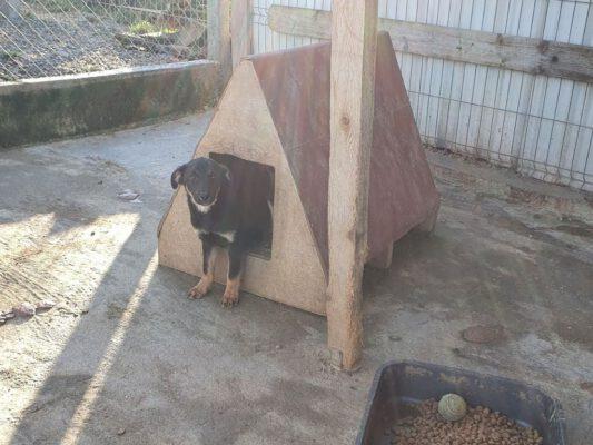 Puppy Darko in het hondenhokje