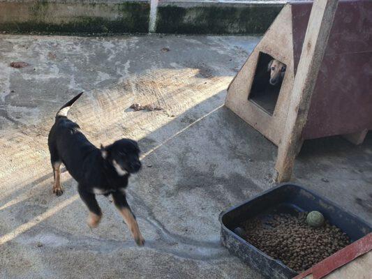 Puppy Darko even gek doen