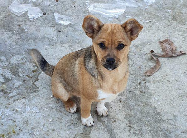 Puppy Missy prachtig hondje