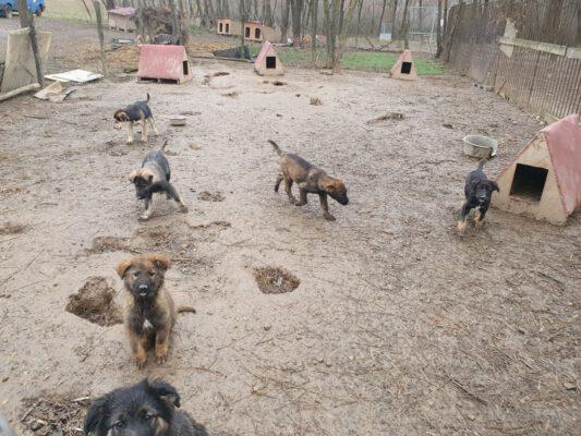 Puppies in het asiel buiten