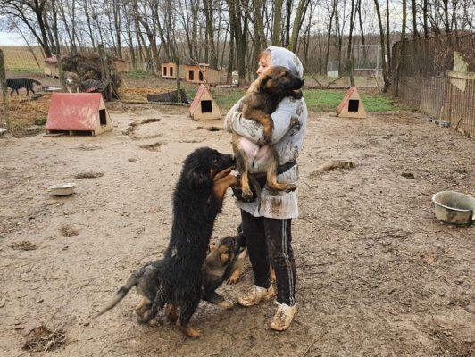 Puppies willen knuffels