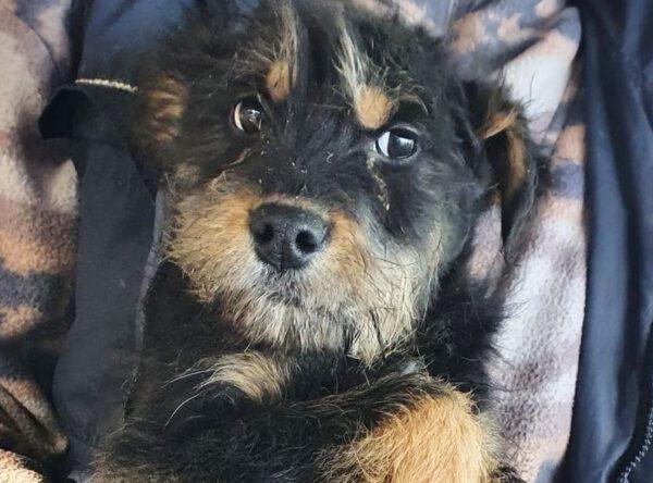 Puppy Aldo