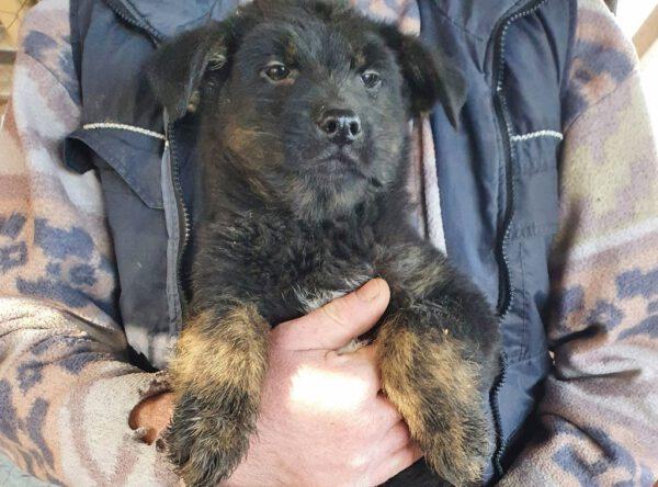 Puppy Alina