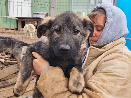 Puppy Arina