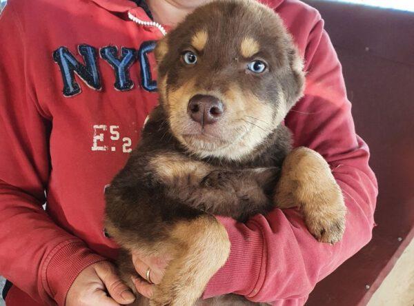 Puppy Arno met blauwe oogjes