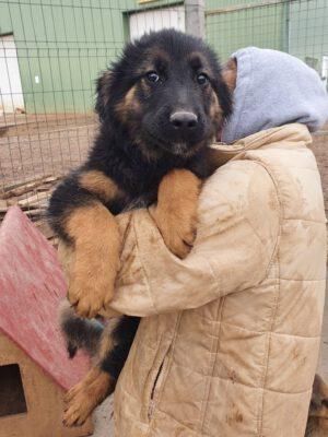 Puppy Arthur
