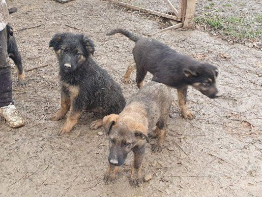 Arthur en de andere pups