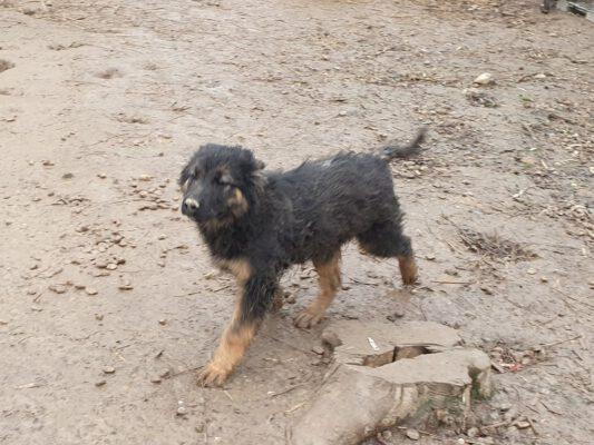 Pup Arthur aan de wandel