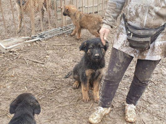 Puppy Arthur in de buitenkennel