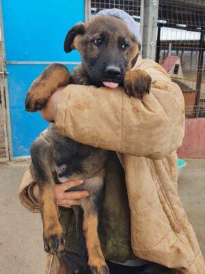 Pup Astor mooi reutje