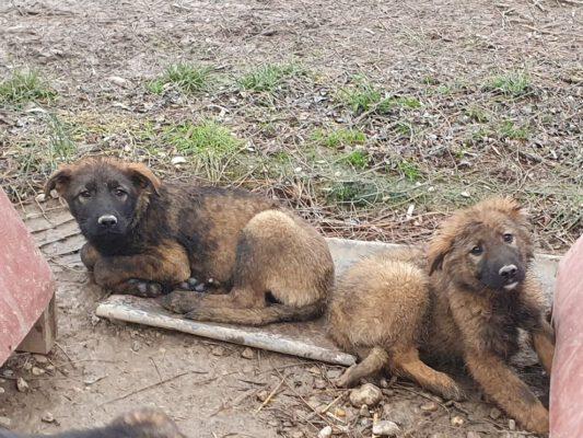 Pup Astor en rechts Meda