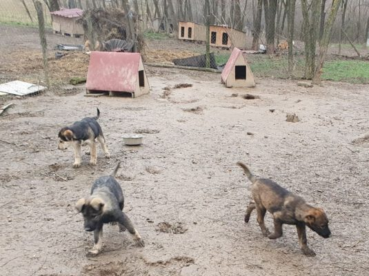 Pup Astor buiten in het asiel