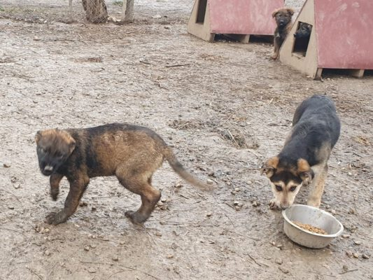 Pup Astor in het asiel