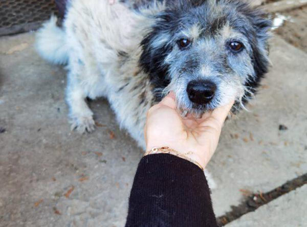 Daila lieve senior hond