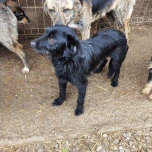 Jessa zwart middelgroot hondje