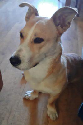 Lotte stoere hond op korte pootjes