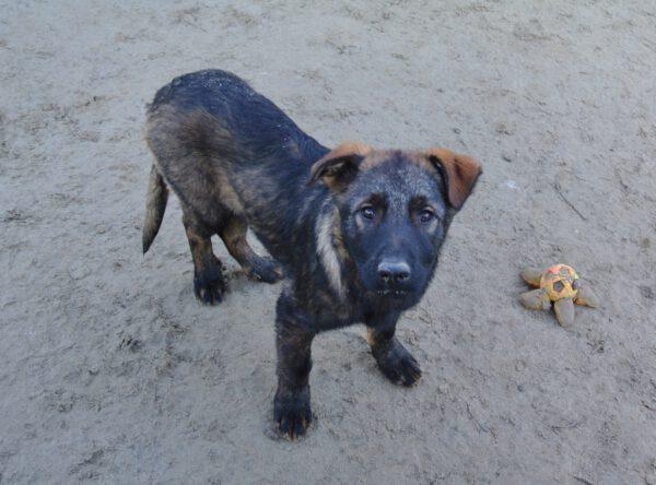 Pup Marko in opvang