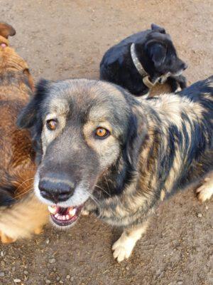 Mathilda grote hond