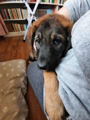 Pup Micike in opvang