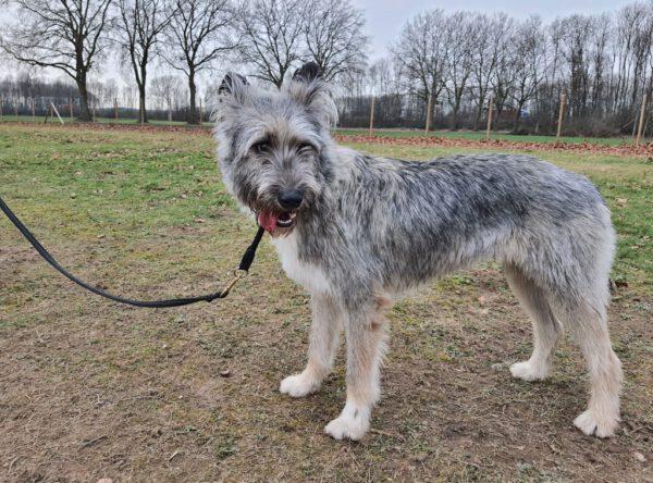 Hond Daigo zoekt nieuwe baasjes