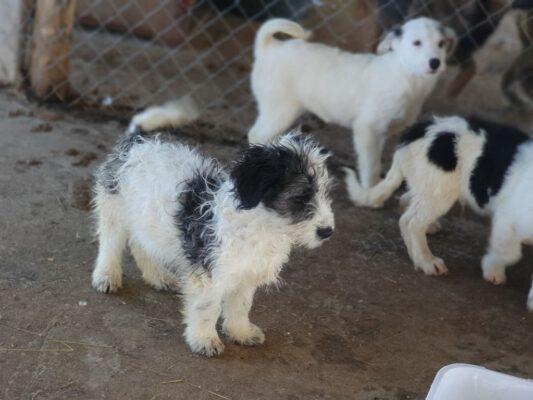Puppies in het asiel