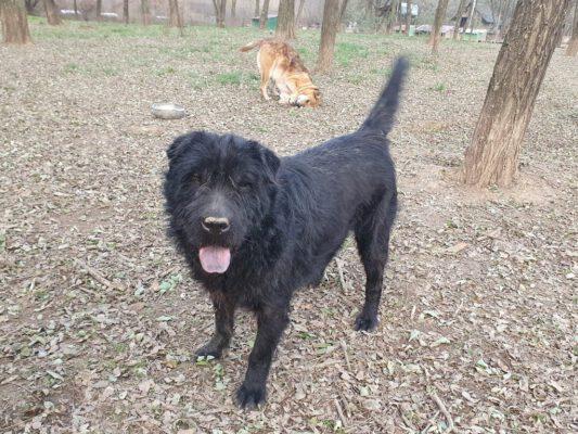 Luzifer zwarte markante hond