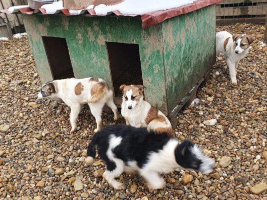 Puppies in het asiel in Roemenië