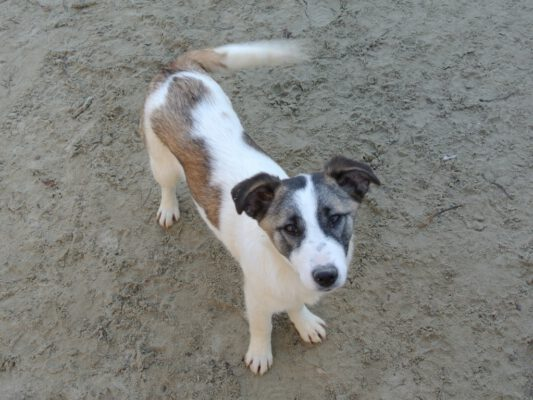 Puppy Reilly