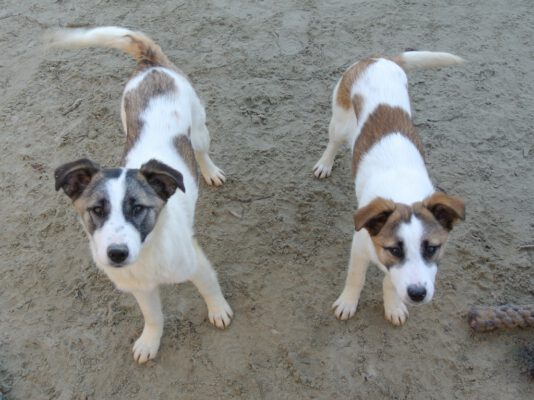 Puppies Reilly en Rowan