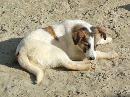 Lieve puppy Rowan