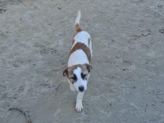 Puppy Rowan