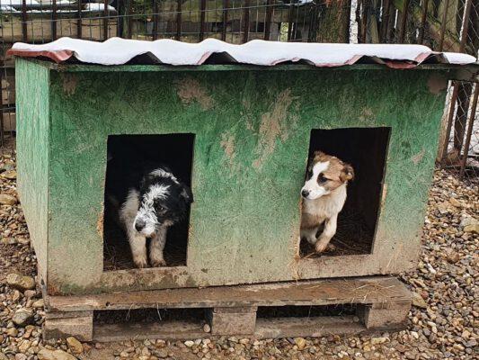 Puppies in het hondenhok