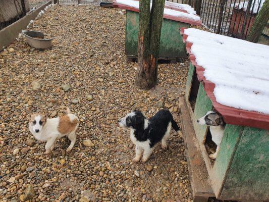 Puppies buiten in het asiel