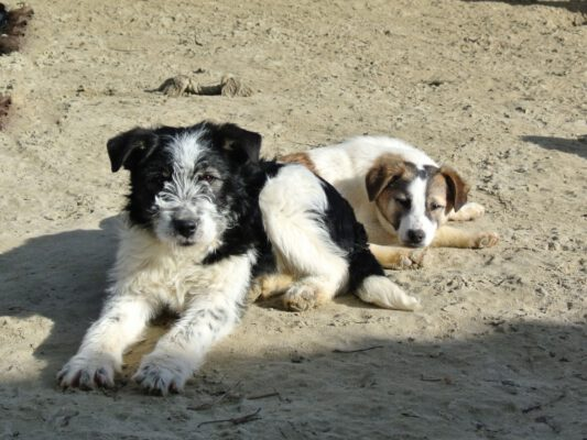 Puppies Shelly en Reese