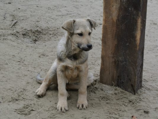 Puppy Tedy