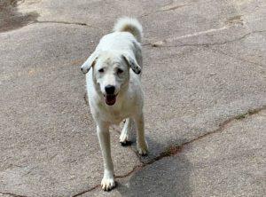 Lieve Aisha dove hond zoekt baas