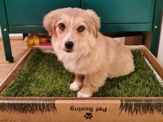 Pup Bingo klein dotje
