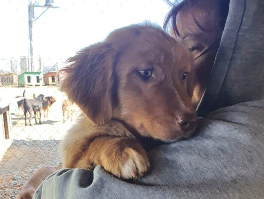 Puppy Boris